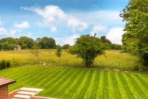 Highfield - big meadow - med (2)